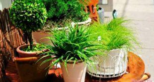 комнатные растения нужны для здоровья